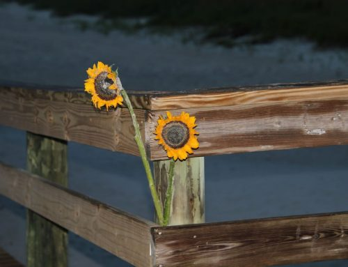 Wednesday August 15th Surf Report #1 & 2 Jacksonville FL