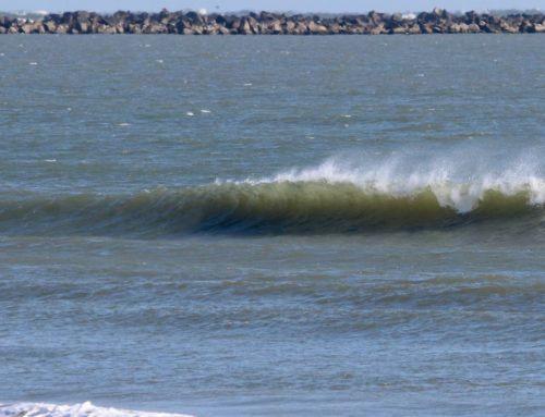Jacksonville Fl Surf Report #2 Monday January 20th
