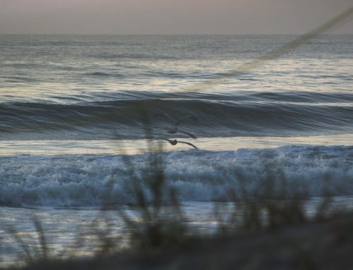 Day 17 NE Florida Surf/Beach Closures Update #1 Monday April 6th
