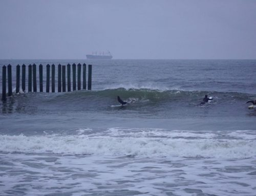 Jacksonville Surf Report #1 Sunday November 29th